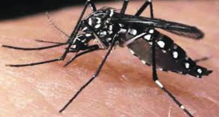 Biting & Stinging Pests
