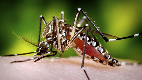 mosquito-treatment