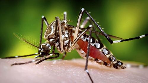 mosquito-treatment